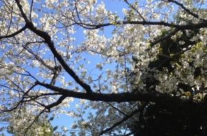 春のカラダ その1 季節がゆるむとカラダもゆるむ