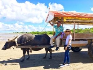 石垣島&西表島の旅 5日目 ☆水牛に運ばれる